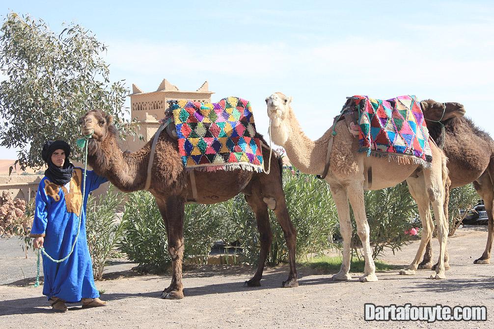 Photos, Camel Trekking Morocco
