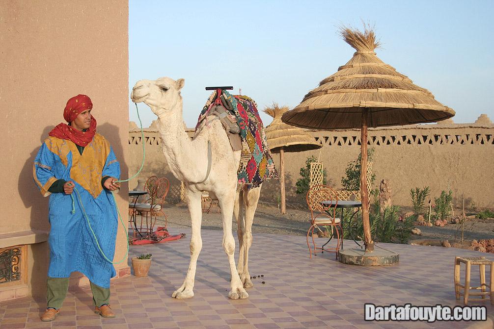 Photos, Merzouga Camel Trekking